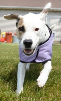 Hurtta Dog Cooling Coat - Size 25cm - Lilac